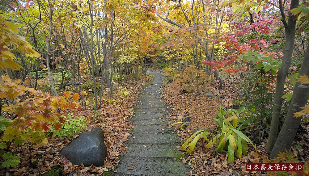 「そば処 楓の森」の秋の庭