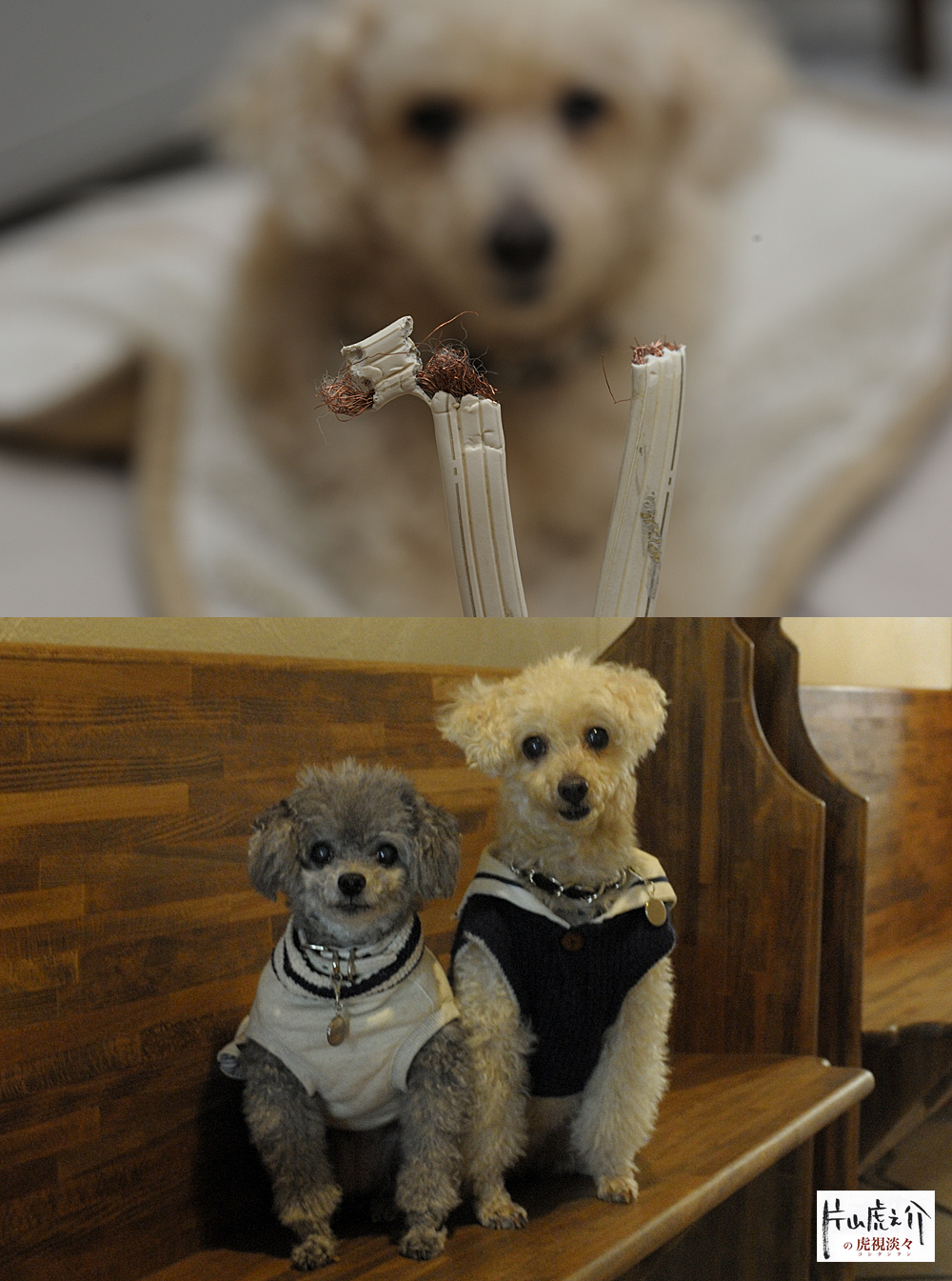 愛犬2匹。